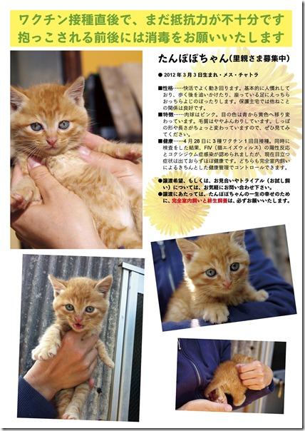 2012-0506_たんぽぽポスター